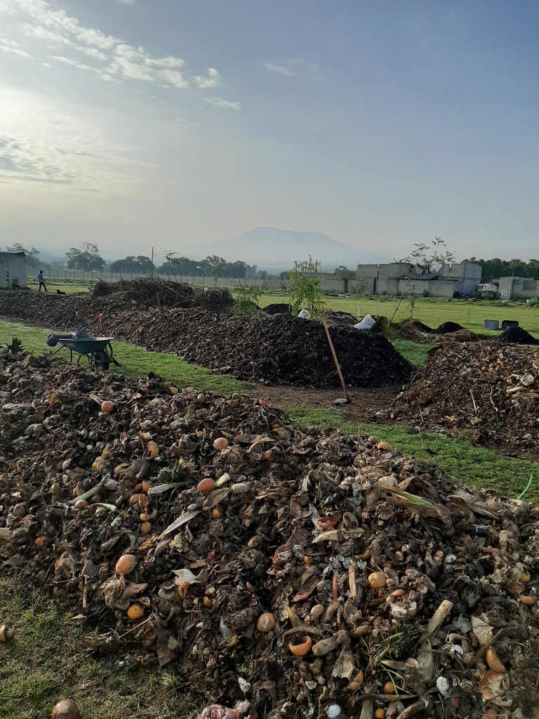 compost maturation process